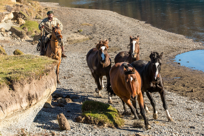 Gauchos herd horses and cattle year around and are equivalent to the North American cowboy.