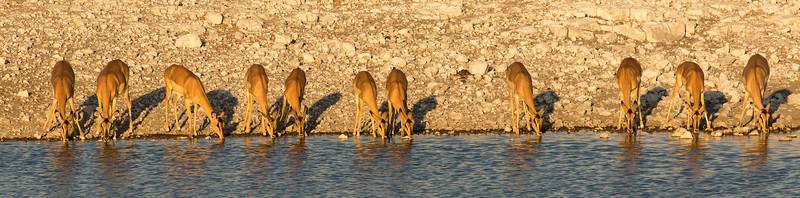 The impala eleven