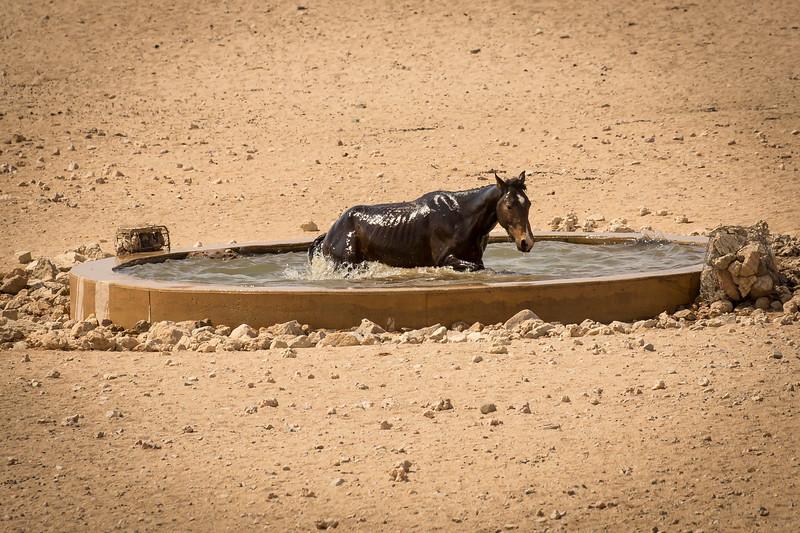 A dip in the waterhole