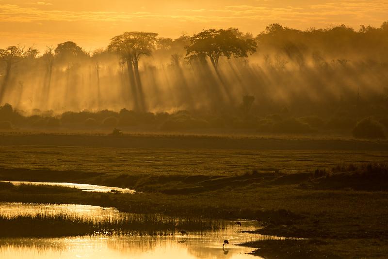 Early morning mist along the Chobe River
