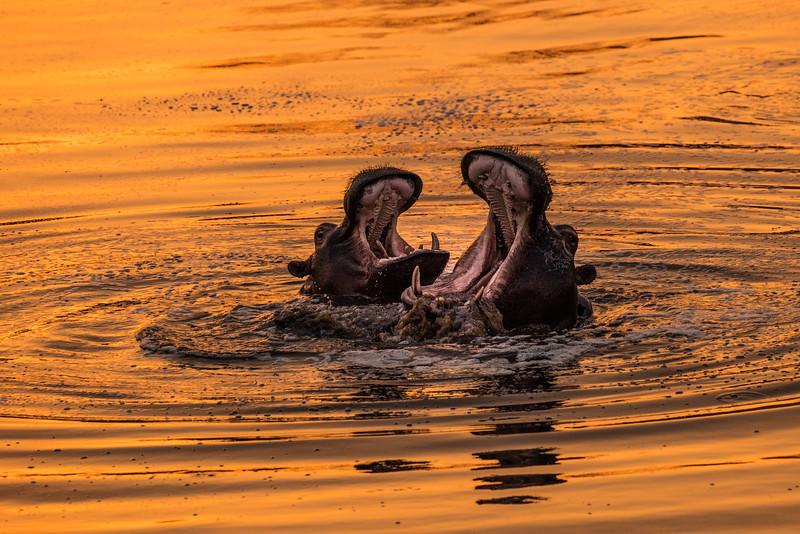 A sunset duet