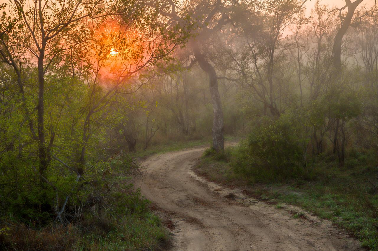 Foggy morning, Cheetah Plains Game Reserve