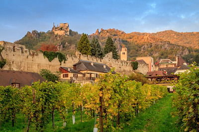 A vineyard in Durnstein near the old city wall.