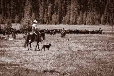 Cowboys, cowgirls, and 'cowdogs'