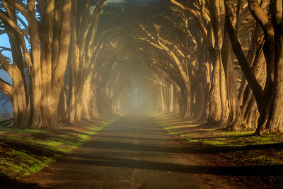 Morning sun breaking through fog in the Tree Tunnel