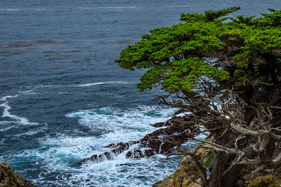 Cypress Trees on cliffs