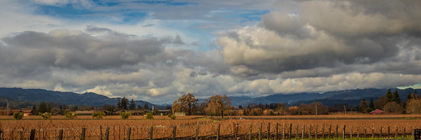 Wine country in winter