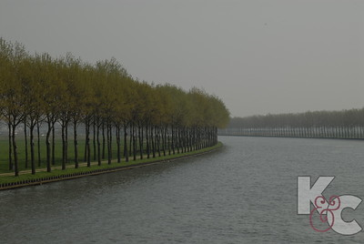 Poplar Trees Line The Rhine