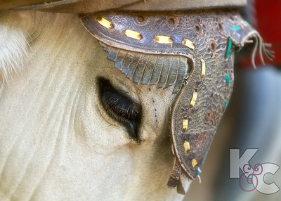Horse With Headress