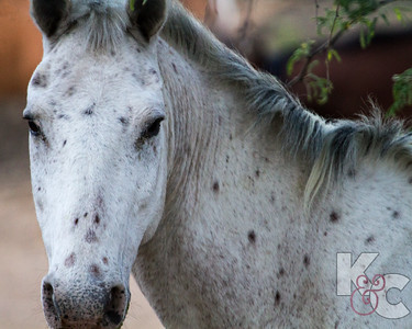 Horse With Spots