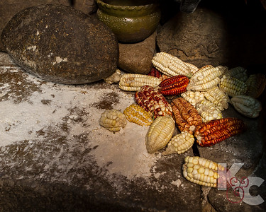 Incan Large-Kernel Corn