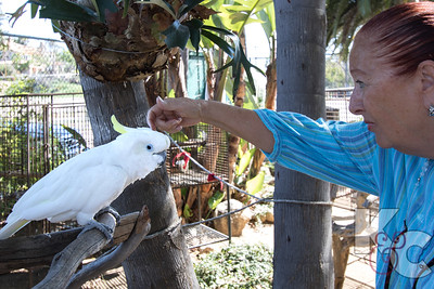 Free Flight Bird Sanctuary, Del Mar - Joanna's Gentle Touch