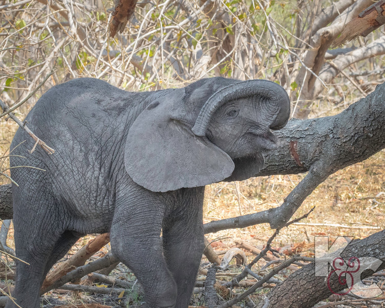 Playing With Trunk