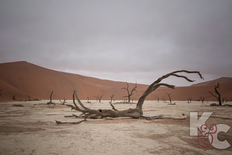 Deadvlei - The Trees Are Estimated To Be Approximately 900 Years Old, However They Have Not Decomposed Due To The Dry Climate.