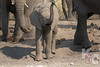 Elephant Baby At Play