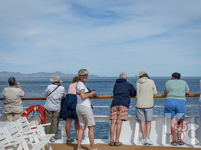 A Motley Crew Watching Blue Whales
