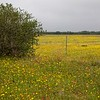 Texas Wild Floweres in South east texas
