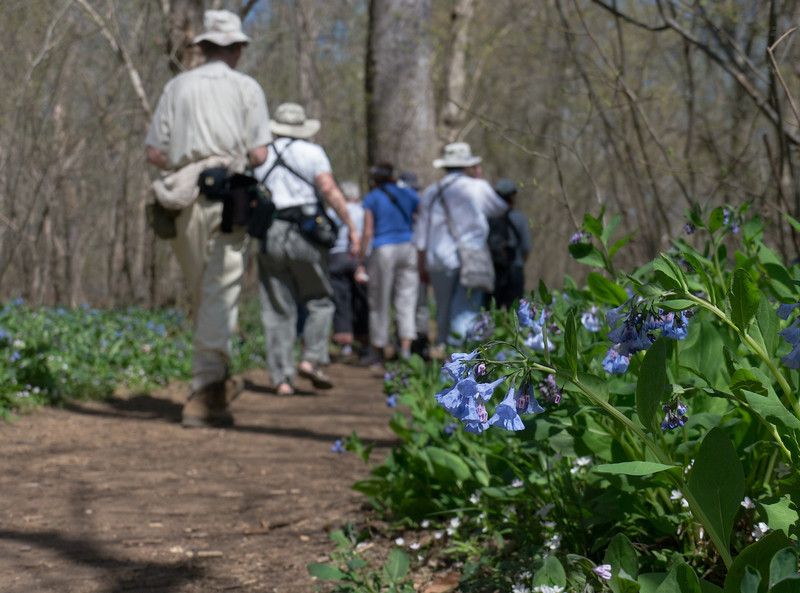 """Bluebells and Butterflies - Riverbend Park (April 2013) - <A HREF=""""/SourceGalleries/2013/04-10-13/30360480_CNbQjW"""">More photos ></A> Led by Stephanie Mason"""