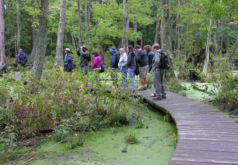 Battle Creek Cypress Swamp (October 2005)<br /> Led by Karyn Molines