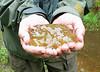 Frog egg mass - Amphibians of Jug Bay (April 2005)<br /> Led by Karyn Molines
