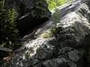 Rocky plant site<br /> by Carol Vorosmarti<br /> Walk #2: Great Falls, June 5, 2013