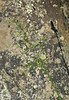 Grass, lichen, shadow<br /> by Liz Jones<br /> Walk #2: Great Falls, June 5, 2013