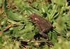 Toad<br /> by Arlene Gmitter<br /> Walk #1: Carderock Recreation Area, April 20, 2013