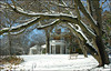 Woodend Winter Tree Arch - DSCN7938