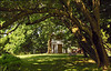Woodend Summer Tree Arch - DSCN6623