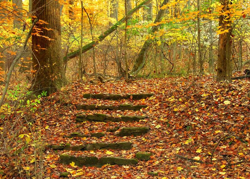 Woodend Fall Woods Steps - DSCN9609