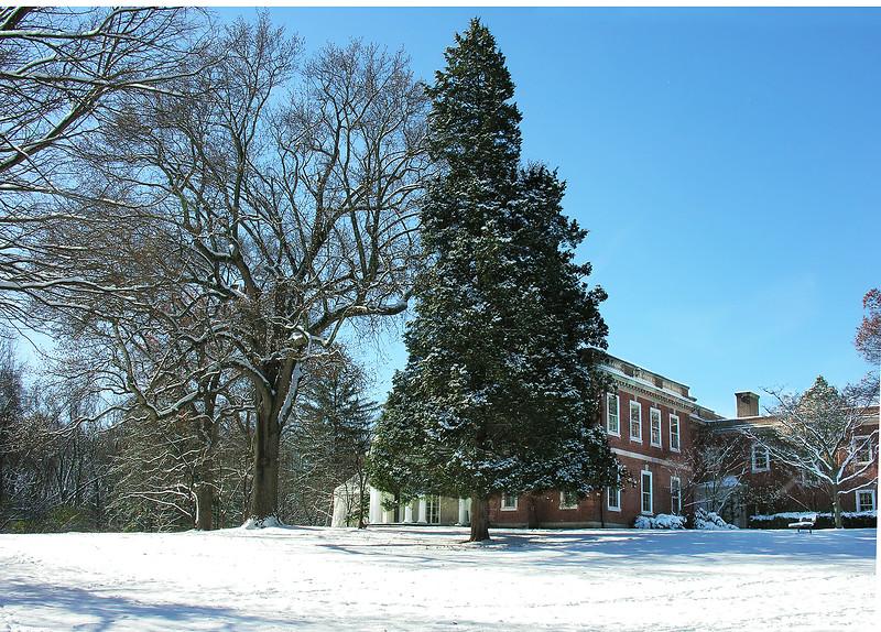 Woodend Winter Eastern Red Cedar - DSCN7944