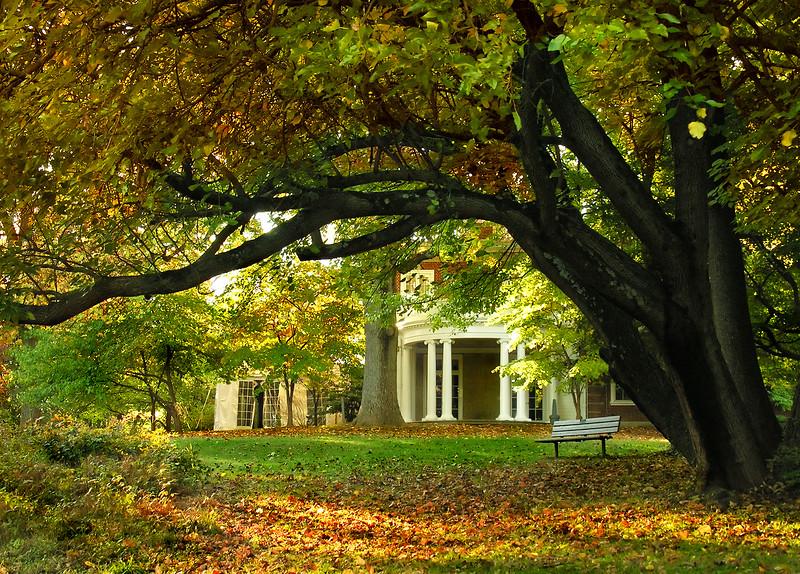 Woodend Fall Tree Arch - DSCN7738