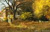 Autumn - DSCN9792 260px