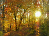 Autumn woods at sunset<br /> Woodend Sanctuary, Chevy Chase, MD