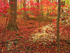 Woods in autumn<br /> Woodend Sanctuary, Chevy Chase, MD