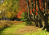 Edge of hemlock grove in autumn<br /> Woodend Sanctuary, Chevy Chase, MD