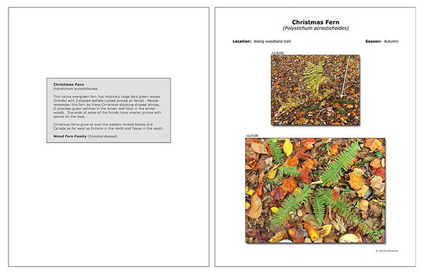 Autumn - Christmas Fern