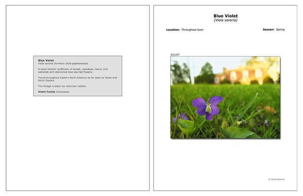 Spring - Blue Violet