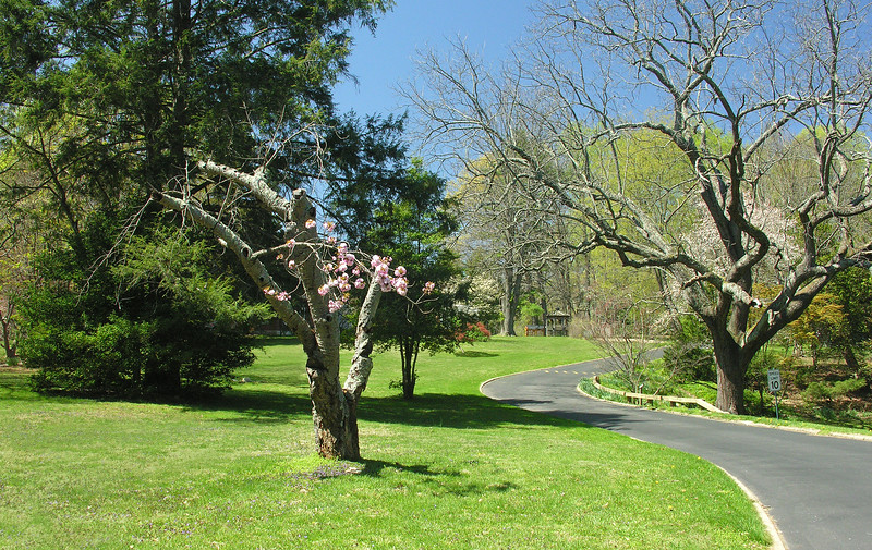 Driveway along north lawn<br /> Woodend Sanctuary, Chevy Chase, MD