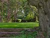 Wedding grove in summer<br /> Woodend Sanctuary, Chevy Chase, MD