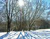 East lawn on winter afternoon<br /> Woodend Sanctuary, Chevy Chase, MD