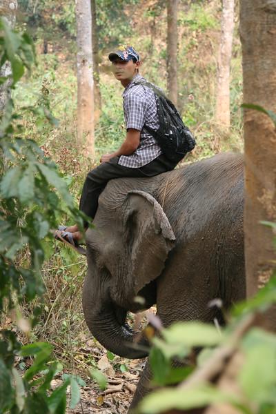 Elephant Trekking, Thailand