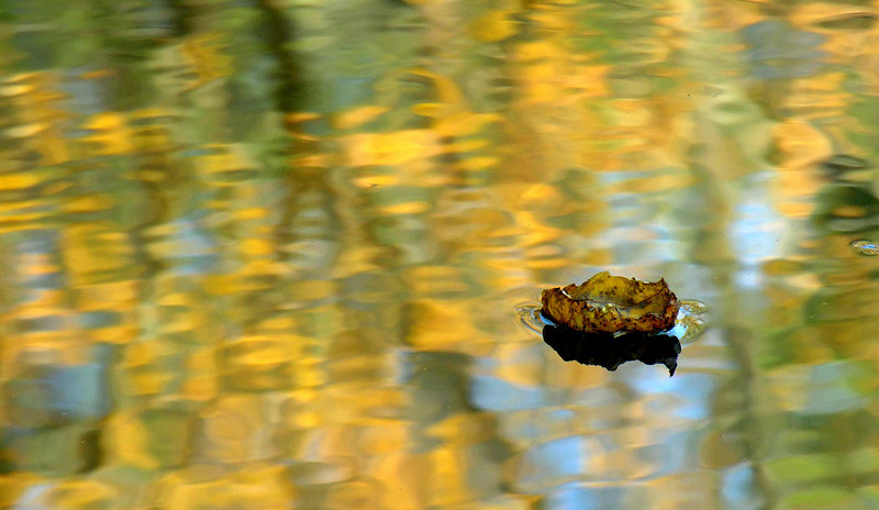 "Autumn leaf ""boat""<br /> Michaux State Forest, PA"