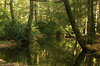Evergreen reflections in East Branch Conococheague Creek<br /> Caledonia State Park, PA