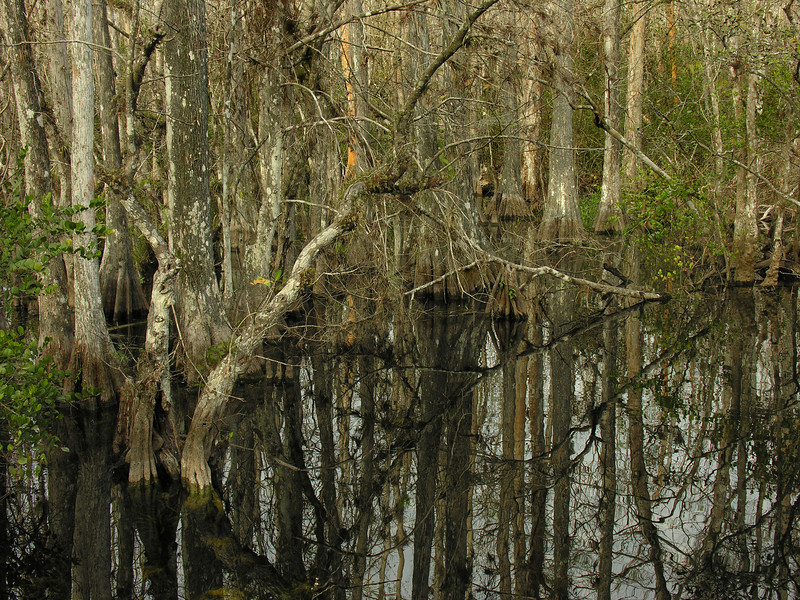 Sweetwater Slough<br /> Big Cypress National Preserve, FL