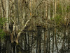 Sweetwater Slough<br /> Big Cypress National Preserve, FL