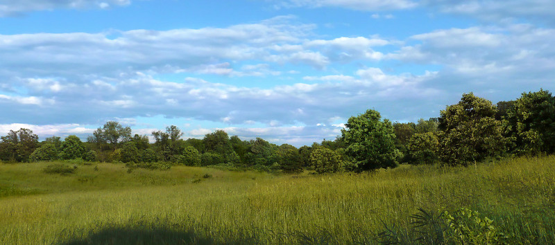 Summer afternoon at Fox Meadow <br /> Rachel Carson Conservation Park, Brookeville, MD