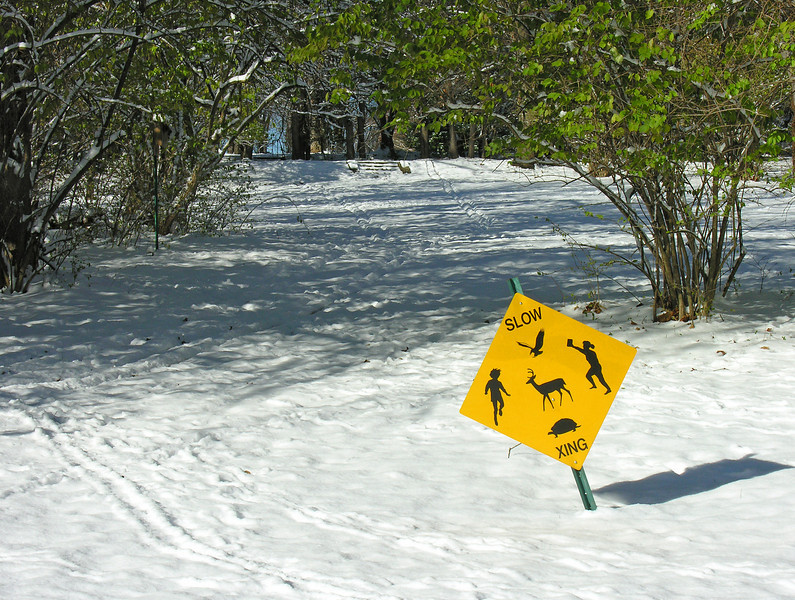 Critter crossing in winter<br /> Woodend Sanctuary, Chevy Chase, MD