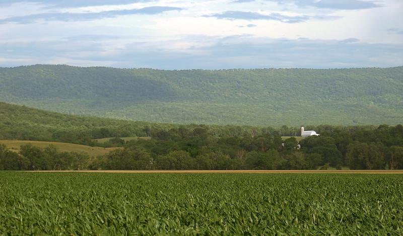 Farmland in Shenandoah Valley along Old Valley Pike<br /> Near Mount Jackson, VA