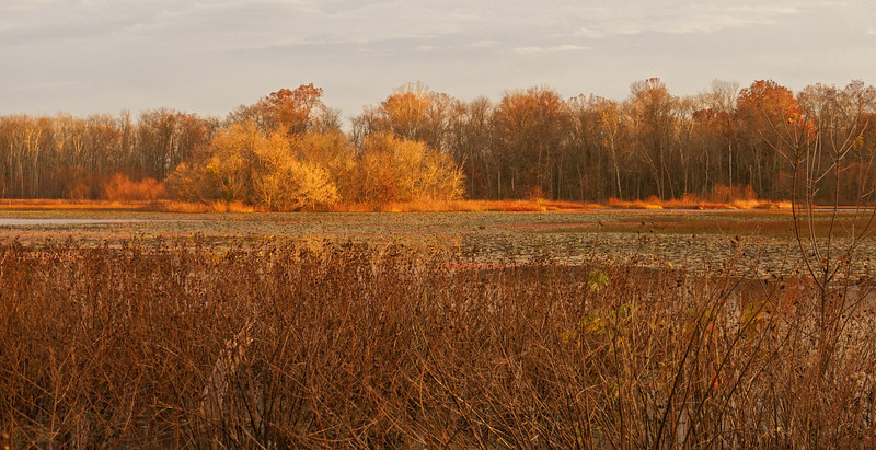 Sunset lighting up the Hughes Hollow freshwater impoundment<br /> McKee-Beshers Wildlife Mgt Area, Poolesville, MD